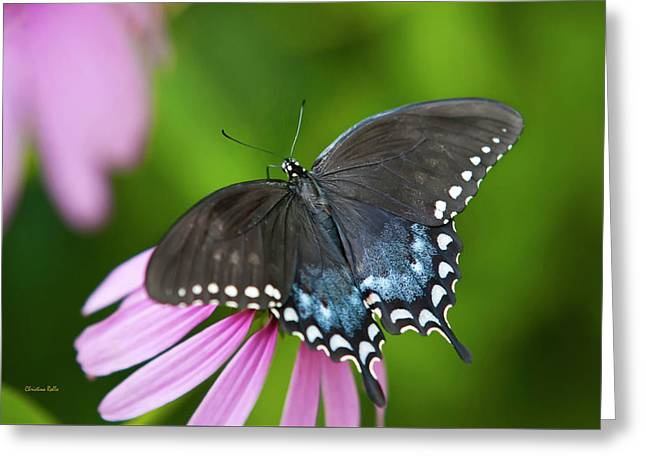 Spice Of Life Butterfly Greeting Card by Christina Rollo