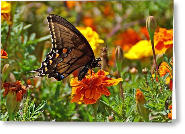 Spicebush On Marigold Greeting Card by Sandy Keeton