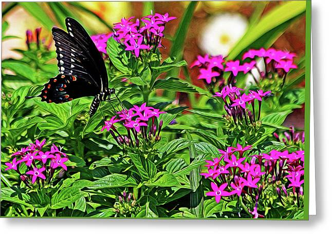 Spicebush Swallowtail Painted Greeting Card by Judy Vincent