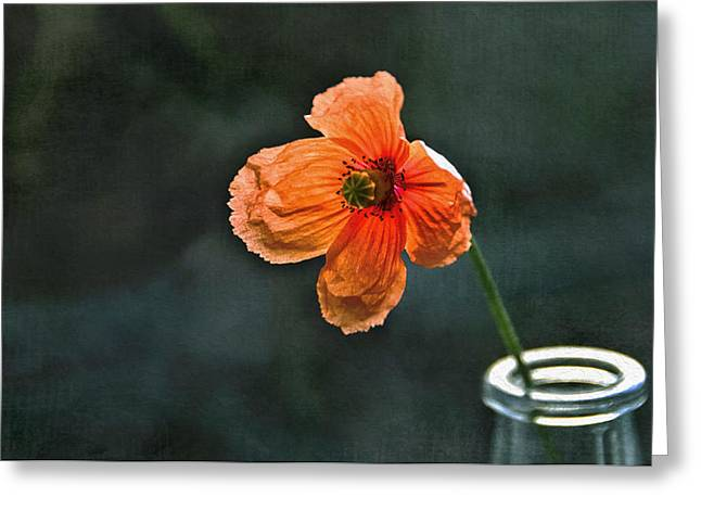Spicy Red Poppy Greeting Card