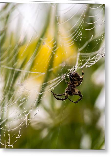 Spider And Spider Web With Dew Drops 04 Greeting Card