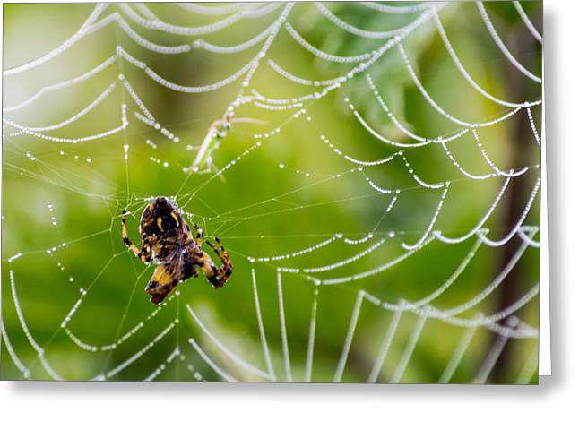 Spider And Spider Web With Dew Drops 05 Greeting Card
