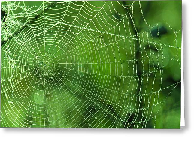 Spider Dew Greeting Card