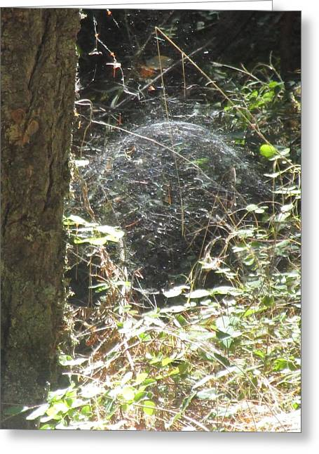 Greeting Card featuring the photograph Spider Dome by Marie Neder