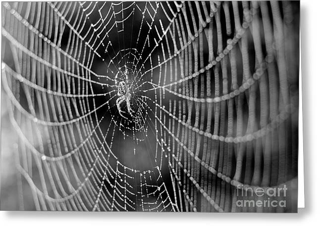 Spider In A Dew Covered Web - Black And White Greeting Card