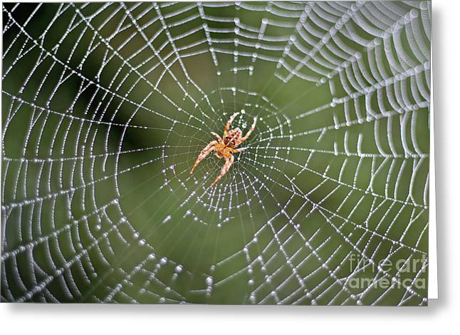 Spider In A Dew Covered Web Greeting Card