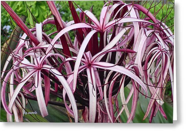 Spider Lily Greeting Card by Athala Carole Bruckner