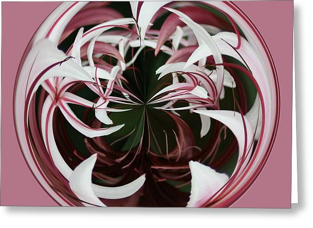 Greeting Card featuring the photograph Spider Lily Orb by Bill Barber