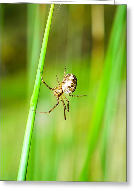 Spider On A Straw  Hanging Greeting Card