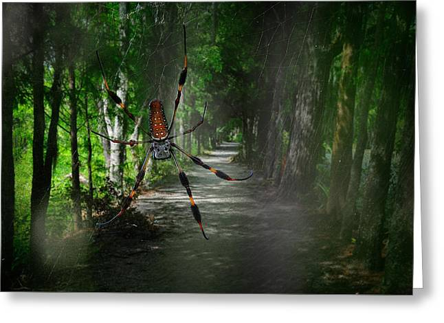 Greeting Card featuring the photograph Spider Road by Harry Spitz