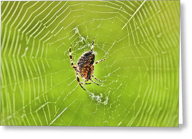 Greeting Card featuring the photograph Spider by Sergey  Nassyrov