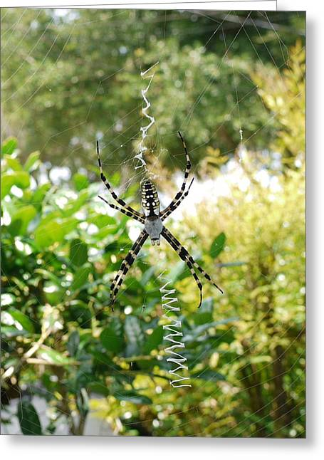 Spider Signals Greeting Card by Bea Godwin