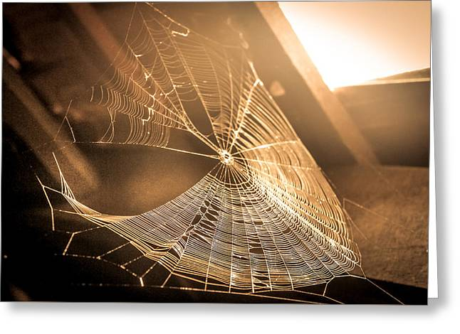 Spider Web Greeting Card by Art Spectrum