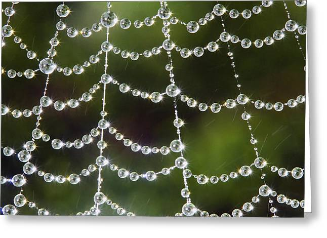Spider Web Decorated By Morning Fog Greeting Card