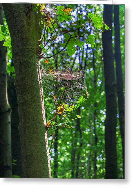 Spider Web In A Forest Greeting Card