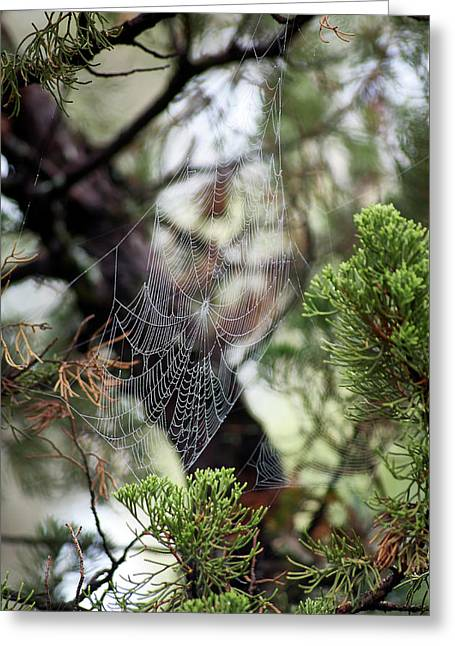 Greeting Card featuring the photograph Spider Web In Tree by Willard Killough III