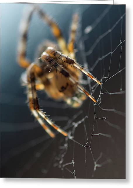Spider Web Light Greeting Card