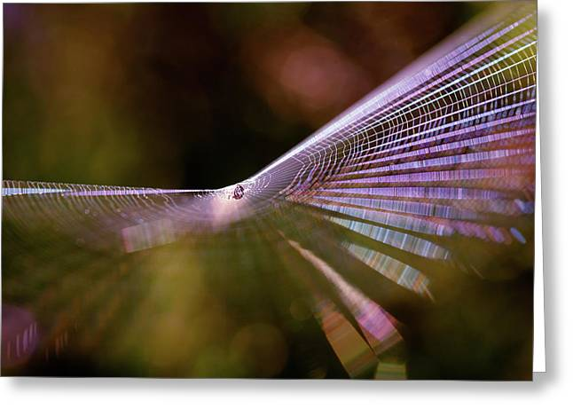 Spider Web Rainbow Magic Greeting Card by Roeselien Raimond