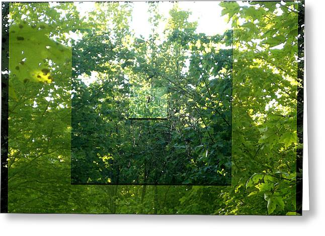 Greeting Card featuring the photograph Spider-web Squares by Michelle Audas