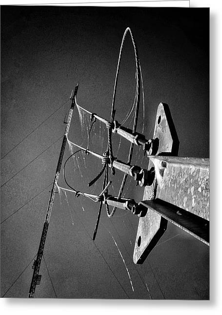 Spider Wire Greeting Card by Buck Buchanan
