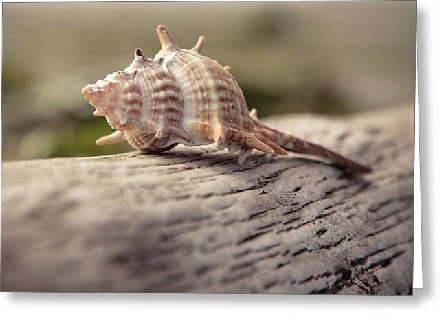 Spiky Seashell Greeting Card