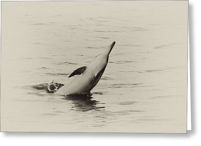 Spinner Dolphin Greeting Card
