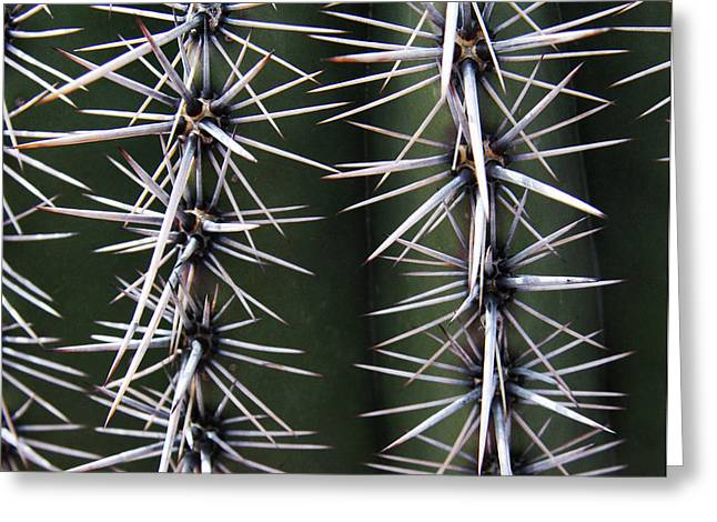 Spiny Cactus Greeting Card