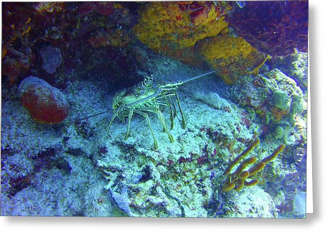 Spiny Palancar Reef Lobster Greeting Card