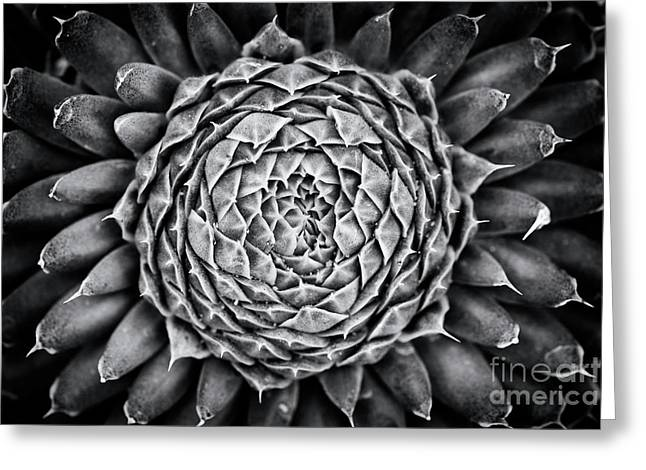 Spiny Pennywort Monochrome Greeting Card by Tim Gainey