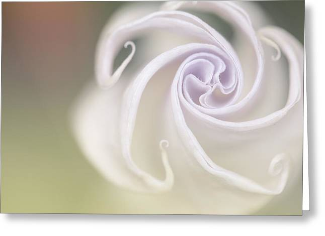 Spiral Greeting Card by Nailia Schwarz