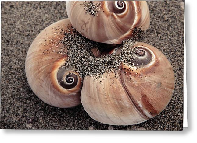Spiral Seashells Greeting Card