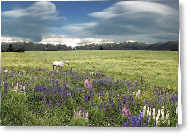 Spirit Pony In High Country Lupine Field Greeting Card