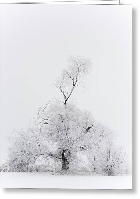 Greeting Card featuring the photograph Spirit Tree by Dustin LeFevre