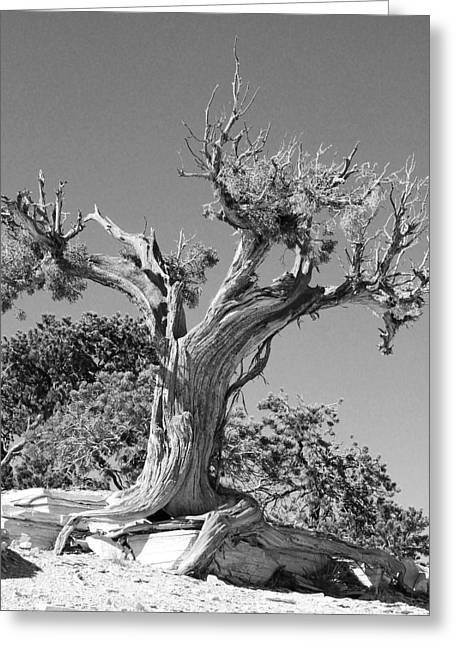 Greeting Card featuring the photograph Spirit Tree by Maggy Marsh