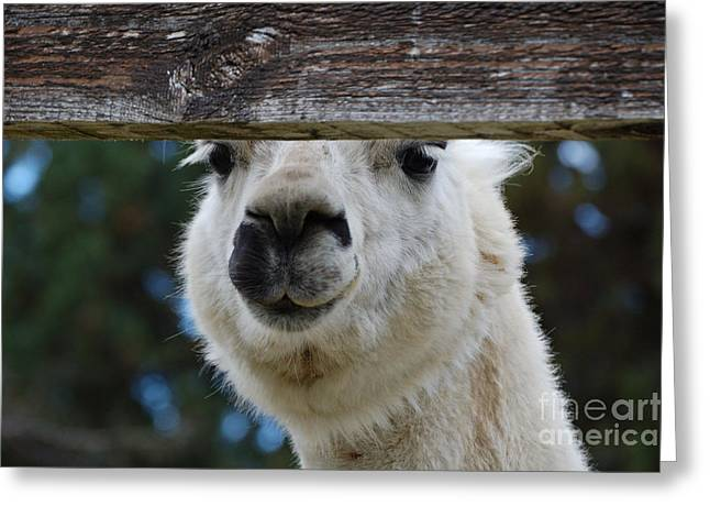 Spit Greeting Card by Diane E Berry