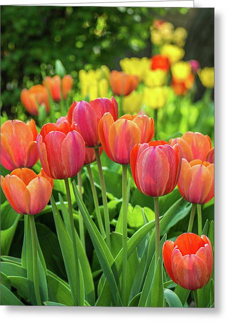 Greeting Card featuring the photograph Splash Of April Color by Bill Pevlor