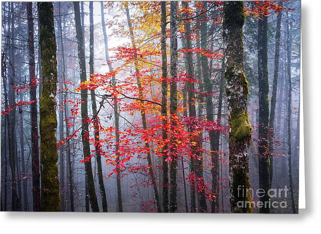Greeting Card featuring the photograph Splash Of Colour by Elena Elisseeva