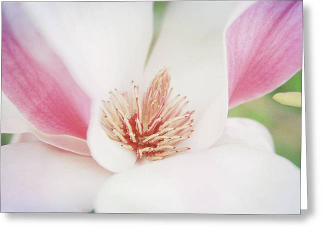 Greeting Card featuring the photograph Splendid Spring by Toni Hopper
