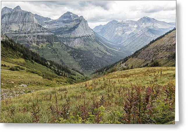 Greeting Card featuring the photograph Splendor From Highline Trail - Glacier by Belinda Greb