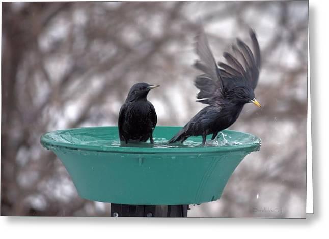 Splish Splash Let's Take A Bath 4 Greeting Card