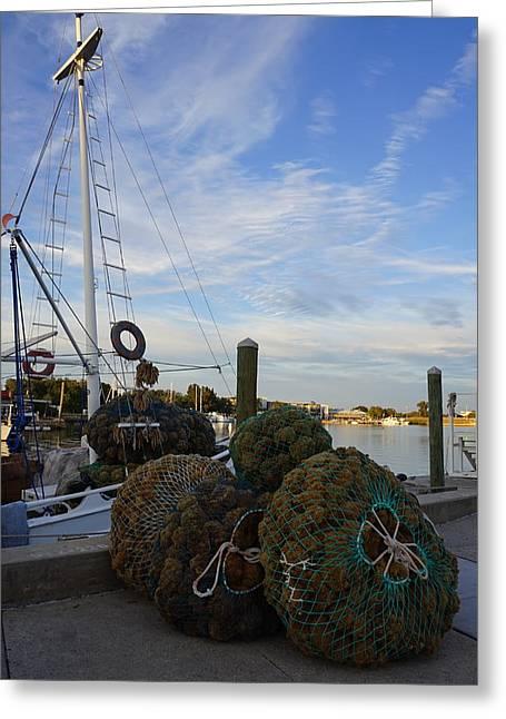 Sponge Docks Greeting Card