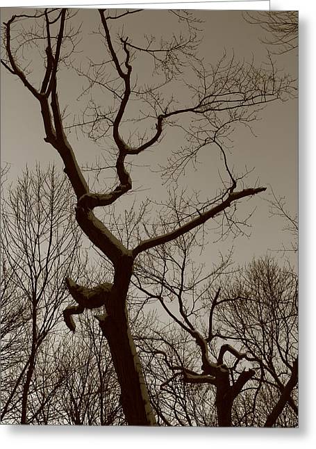 Spooky Gnarly Forest Greeting Card