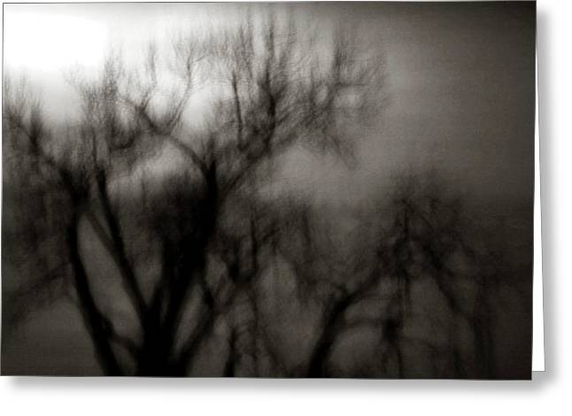 Spooky Tree Bw Greeting Card