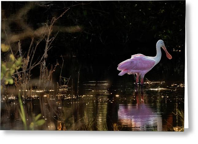 Spoonbill Fishing For Supper Greeting Card