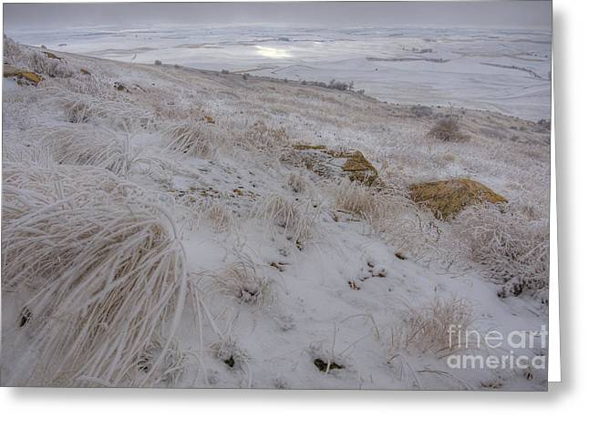 Spot Of Sun Greeting Card by Idaho Scenic Images Linda Lantzy