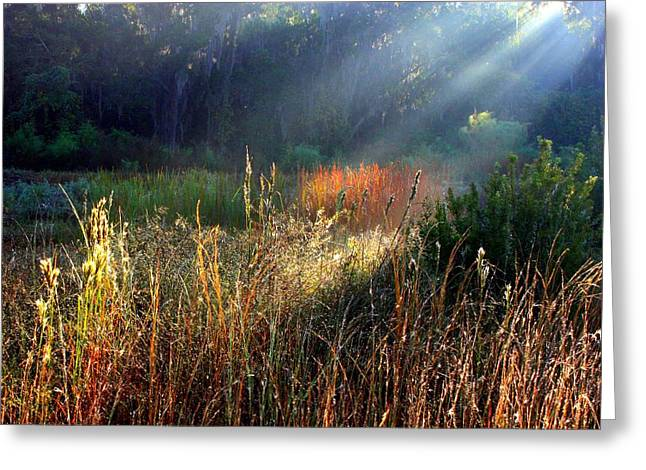 Morass Greeting Cards - Spotlight on Red Reeds Greeting Card by Carol Groenen