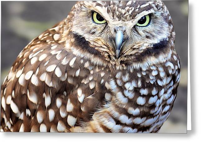 Spots - Burrowing Owl Greeting Card