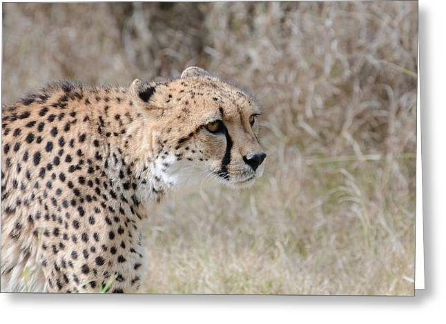 Greeting Card featuring the photograph Spotted Beauty 2 by Fraida Gutovich