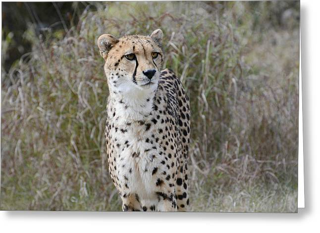 Greeting Card featuring the photograph Spotted Beauty by Fraida Gutovich