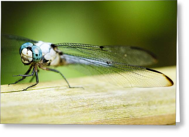 Spotted Dragonfly Greeting Card by Marilyn Hunt